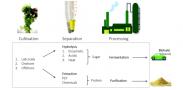 Development of algae-bacteria symbiosis to generate energy and food