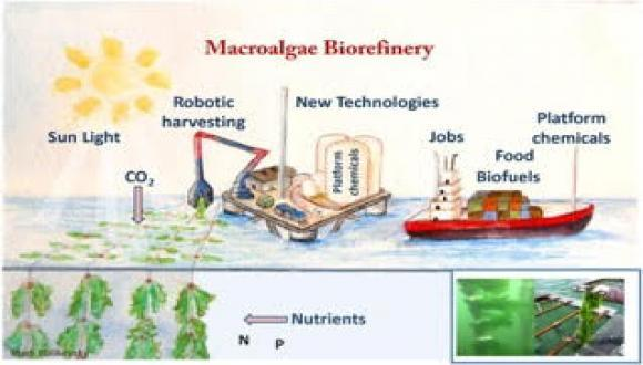 Marine Offshore Biorefinery In Israel Workshop - Summary and Presentations